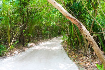 Walkways under the Canopy of Trees