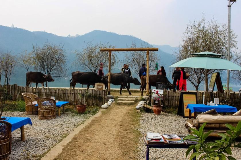 bamboo bar pokhara nepal