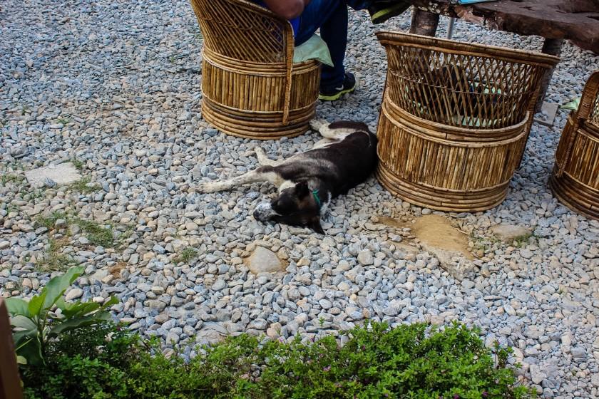 bamboo bar dog sleeping pokhara nepal