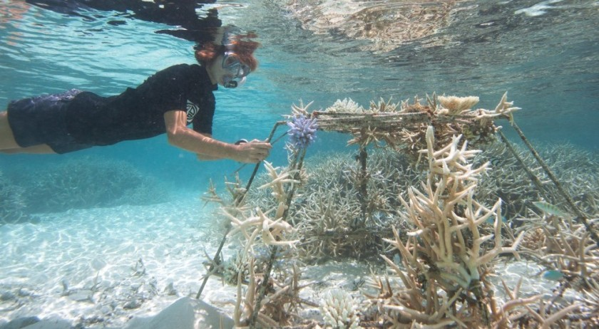 Coral-Nurseries-Experience-at-Coco-Bodu-Hithi