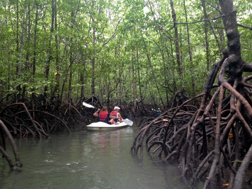 mangroves langkawi