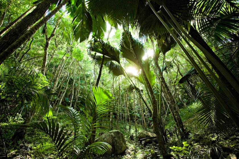 valle de mai seychelles